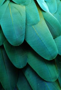tourqoise-feathers
