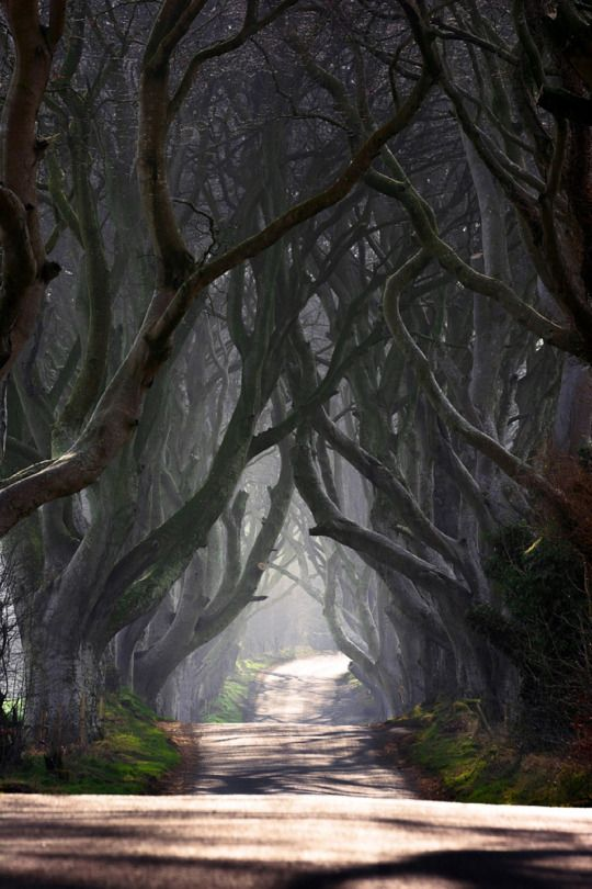tree tunnel_light