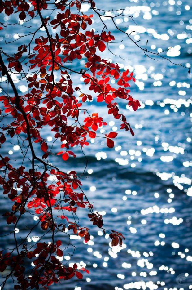 Twinkling Autumn by C. Padilla