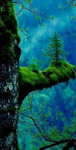 vibrant green moss_tree