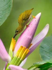 busy hummingbird
