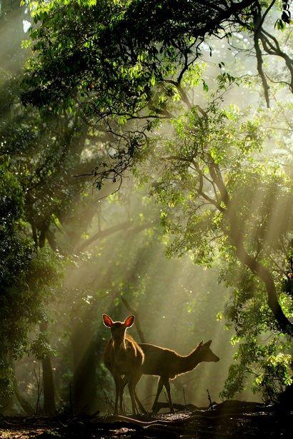 deer_streams of light