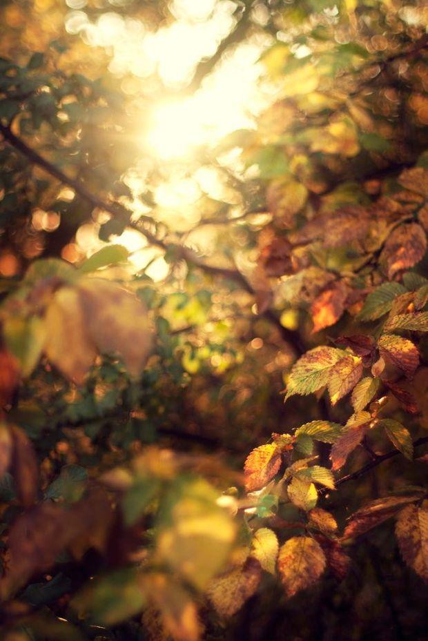 golden leaves_dappled light