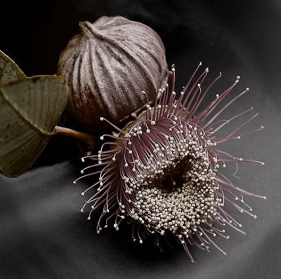 gumnut-color-and-texture-floral-dark-and-moody