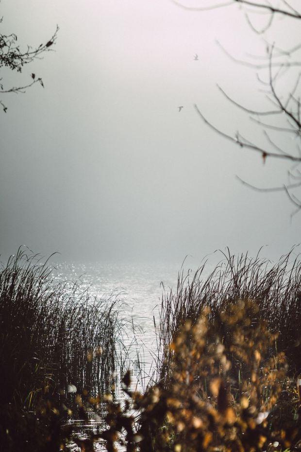 lakeside-reeds