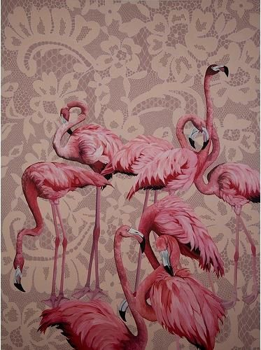 pink flamingoes_lace