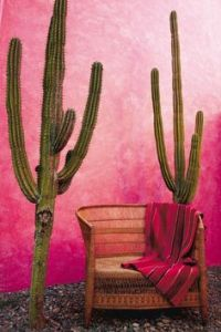 pink wall and cactus