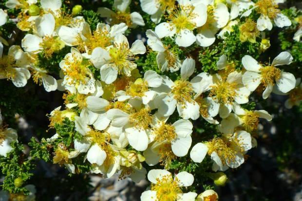 white and flowers _TomSeliskar