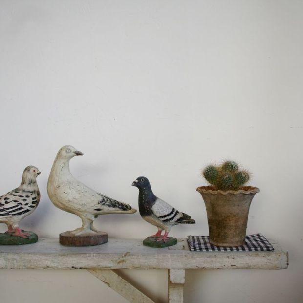 birds_cactus