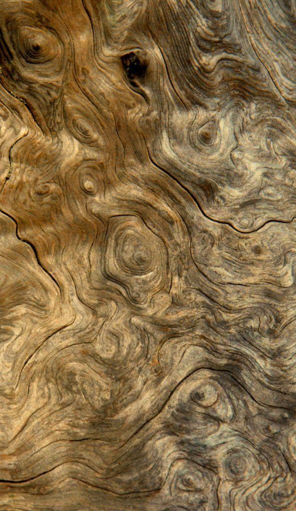 burled wood