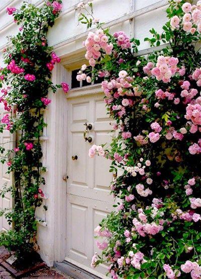 climbing roses_doorway