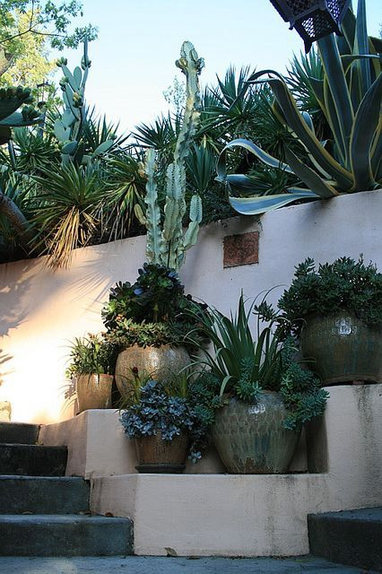 glazed pots and succulents