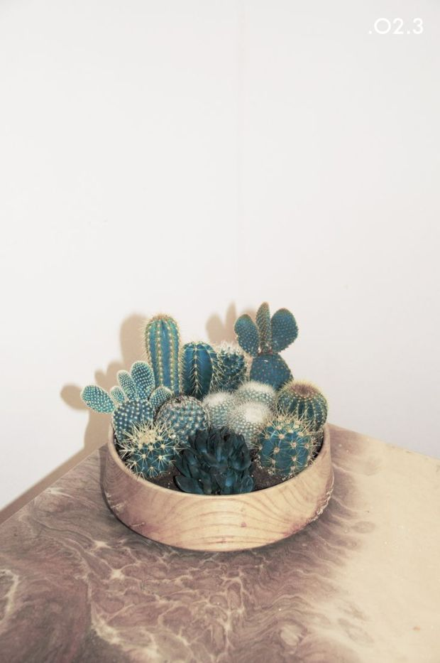 inside cacti
