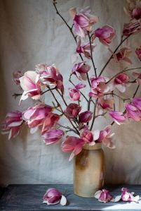 Japanese Magnolias photographs and arrangement by rinne allen