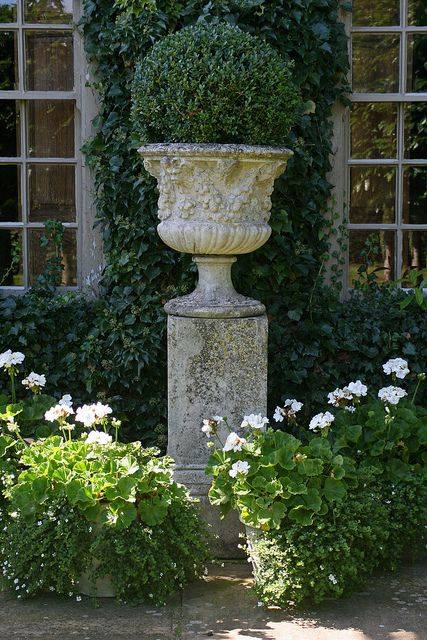 urn and boxwoods