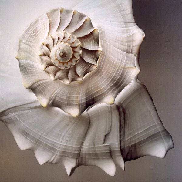 white shell detail