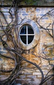 window and branches