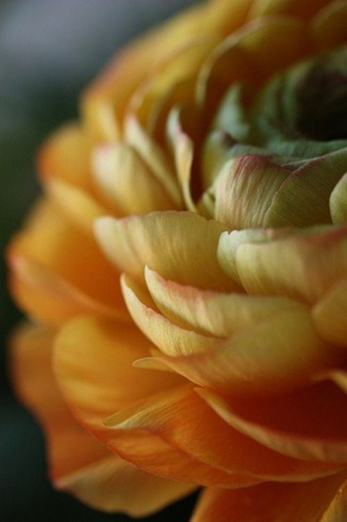 orange-petals