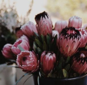 pail of protea