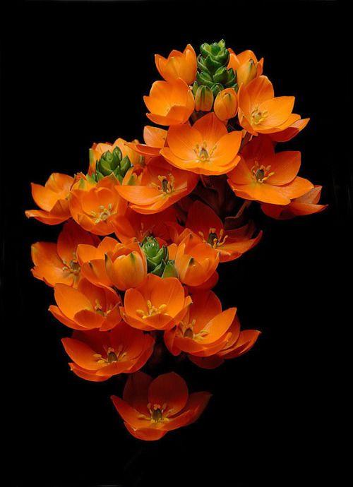 stunning orange