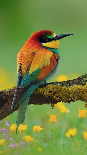 bird_bee-eater_branch_flower_59917_640x1136 by vadaka1986