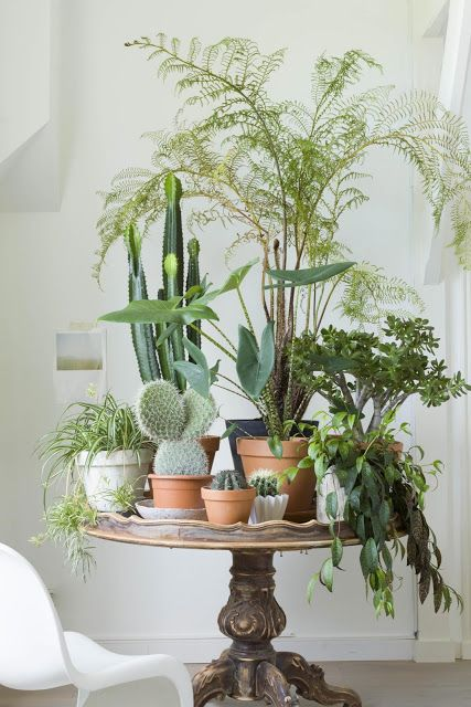 planted pots on pedestal