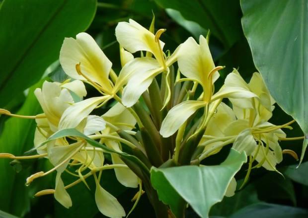Tropical Flowers by Tom Seliskar