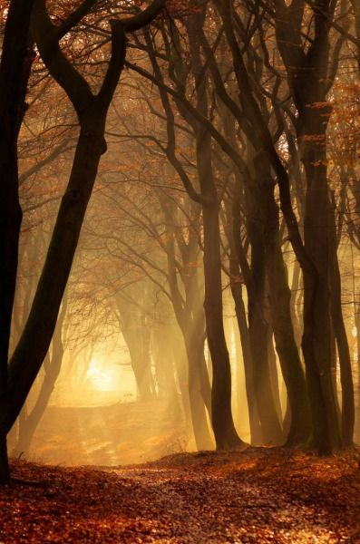 Into the Mystic, The Netherlands photo via regi