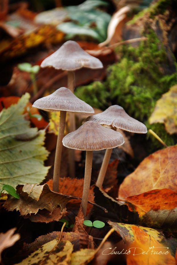 Mushrooms - Funghi - Explored #141 by claudiodelfuoco on Flickr