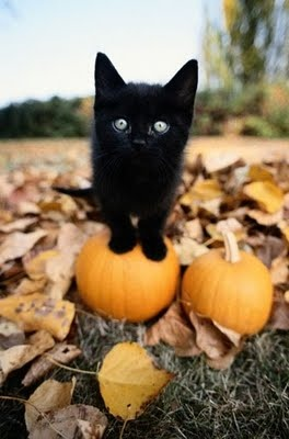 Black Kitten Standing on Top of a Pumpkin by John Giustina on Getty Images