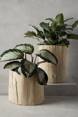 Ojai Garden Pot via anthropologie