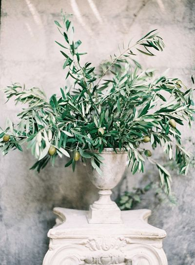 urn_olive branches