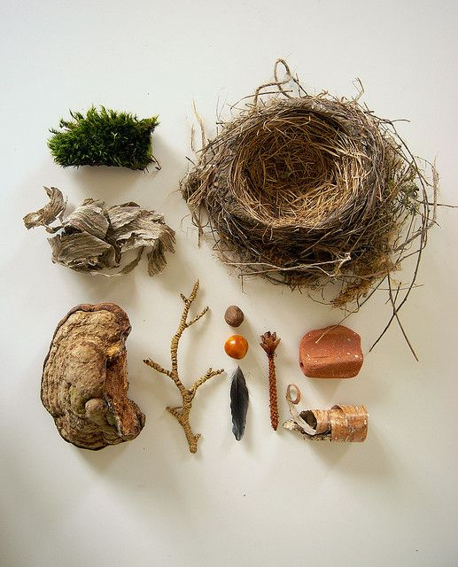 collection from nature by Camilla Engman on Flickr