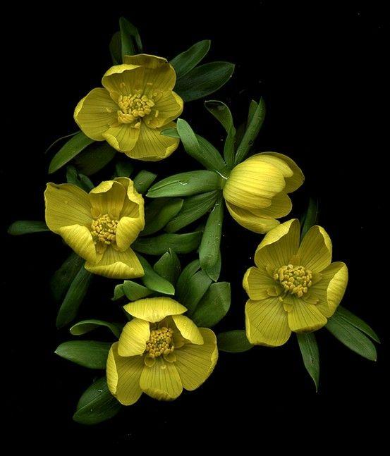 Black Yellow Green by Digirrl