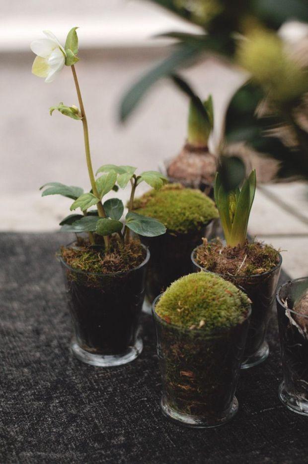 Stilleben med julros och hyacint I Zetas Trädgård