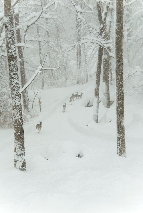 winter deer via tumblr
