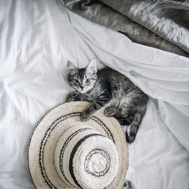 cat and hat via Tumblr