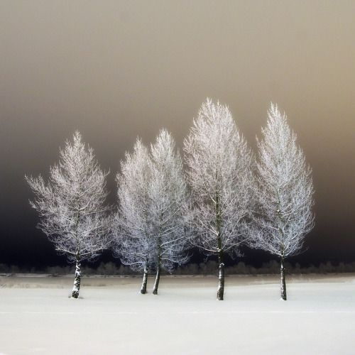winter trees via thefullerview