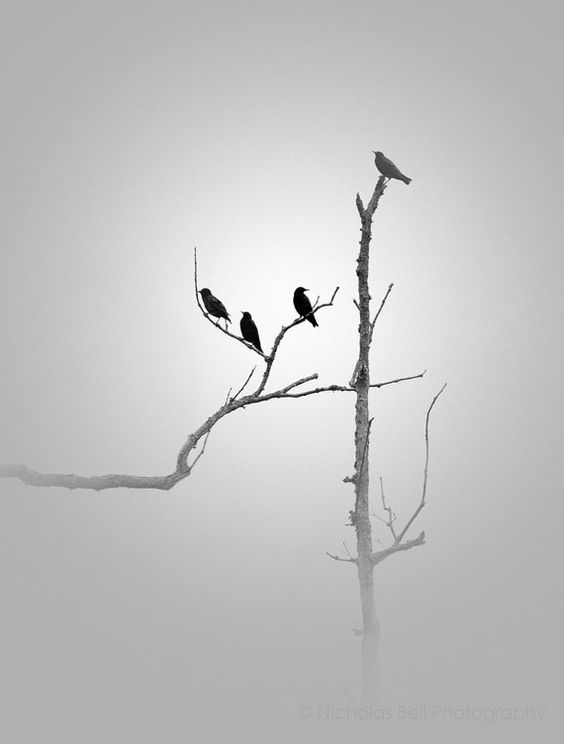 Black and White photography nature birds by NicholasBellPhoto