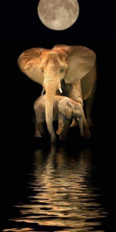 Elephants via Peace&Love