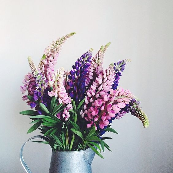 Lupins by Linda Lomelino