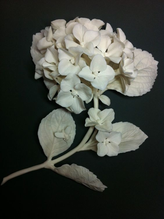 porcelain-flowers-hydrangea-russian-porcelain-artist-lada-peskova