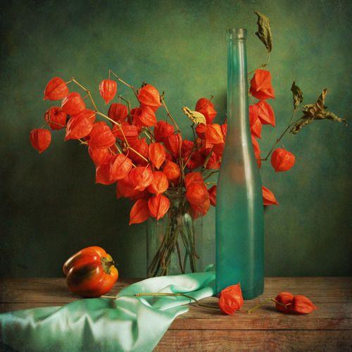 by JOLANTA BRIGERE