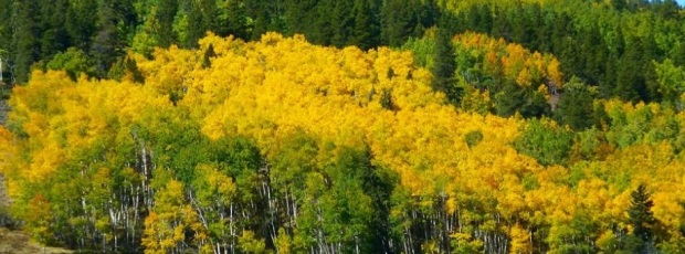 fall-colors-along-the-marshall-pass-rd-by-tom-seliskar