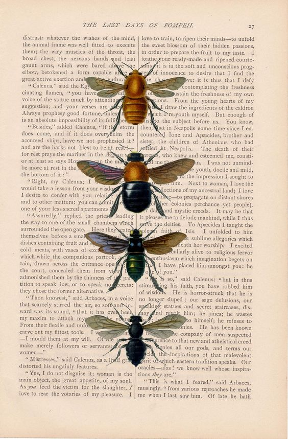 honey-bees-honeybees-dictionary-art-vintage-by-exlibrisjournals