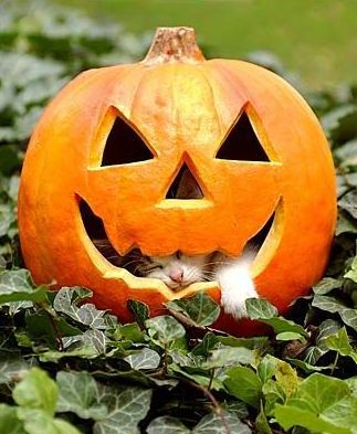 kitty-in-jackolantern