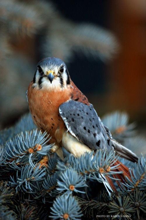 bird_karen-l-sirna