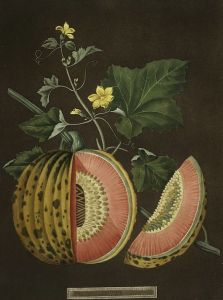 george-brookshaw-cantaloupes-1812