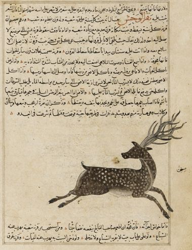folio-from-wonders-of-creation-by-al-qazvini