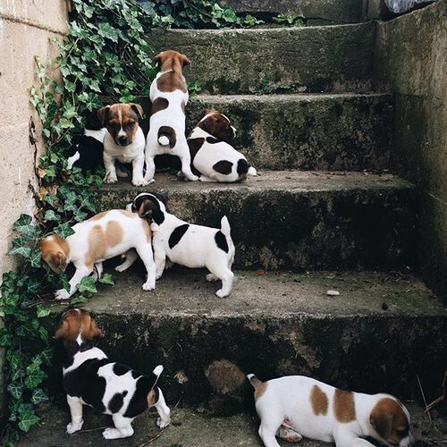 puppies-via-thefullerview